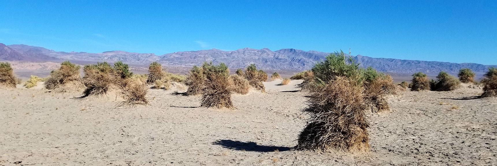 Death Valley National Park Devil's Cornfield November 24th 2018