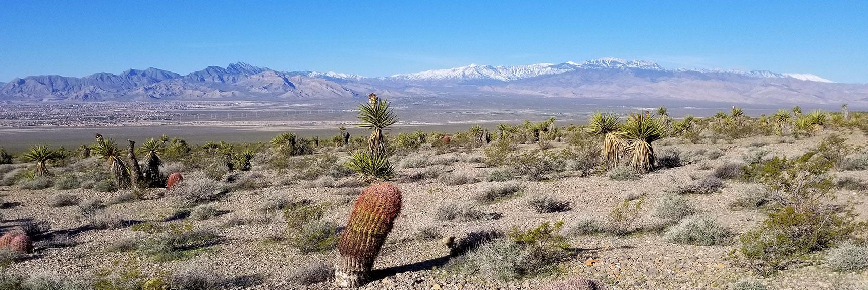 Assortment of Desert Plants South of Gass Peak, Nevada