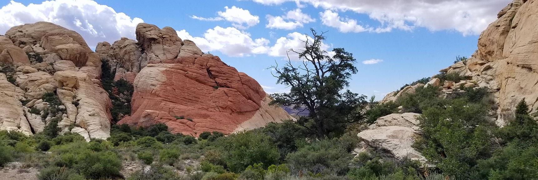 Returning to the Turtlehead Peak Trailhead in Red Rock National Park, Nevada