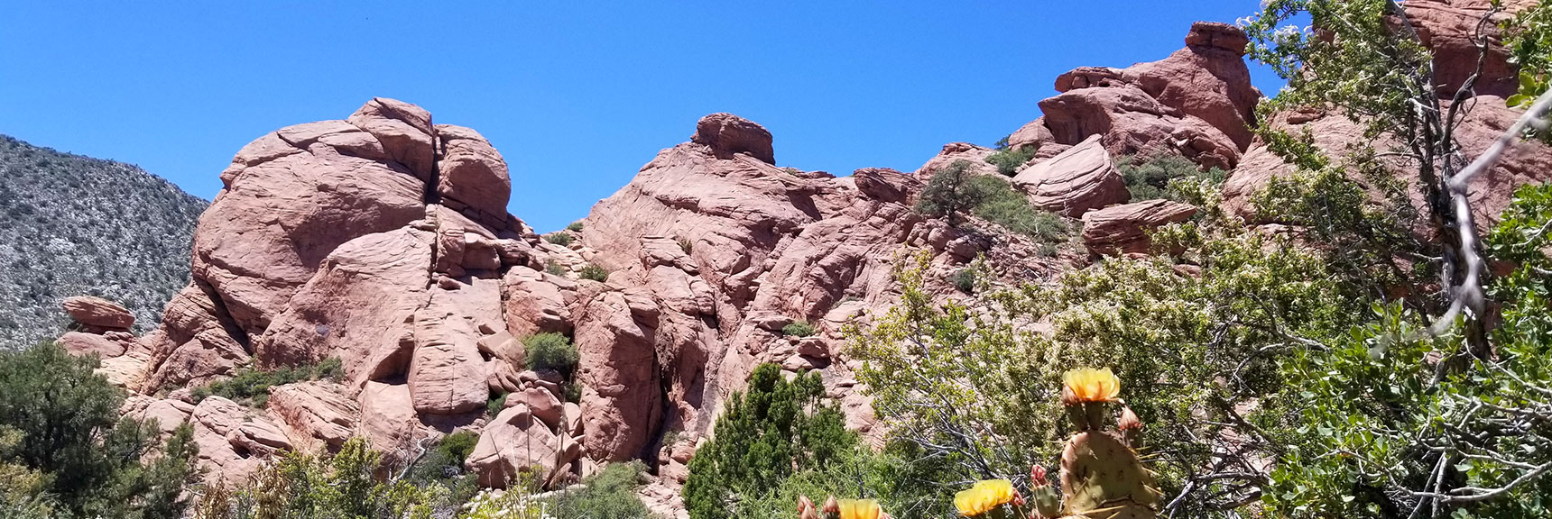 Upper Calico Basin Near Base of Damsel Peak
