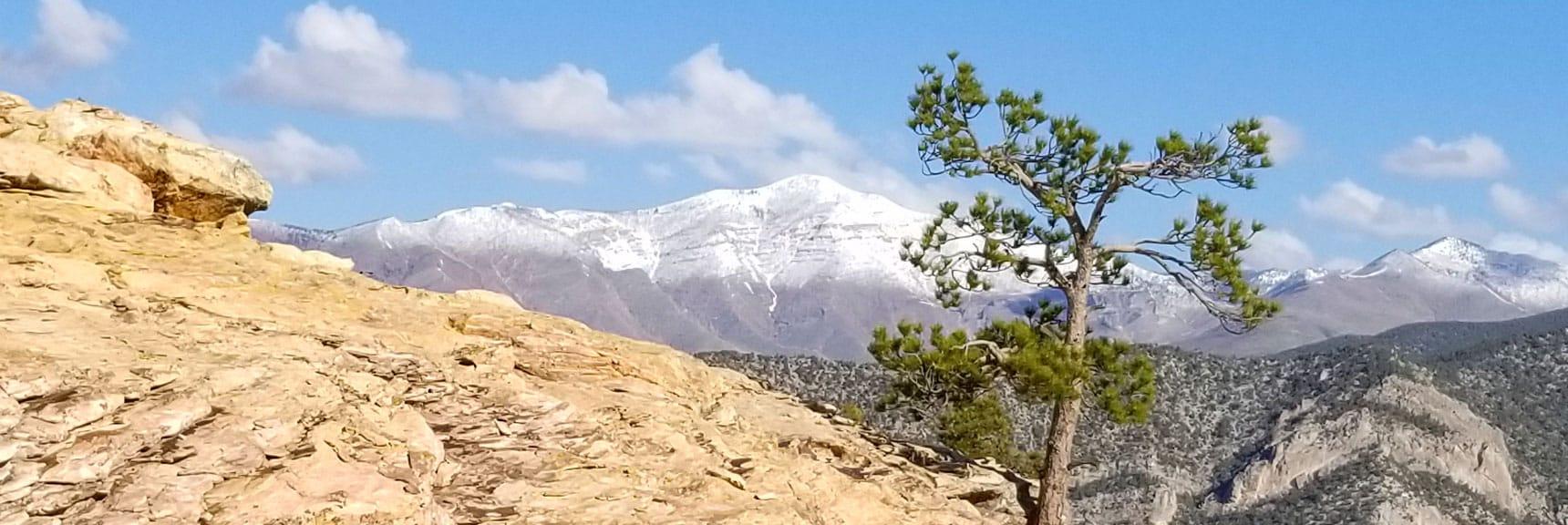 Griffith Peak in Mt Charleston Wilderness Viewed from Piedmont Ridge, Red Rock Park, Nevada