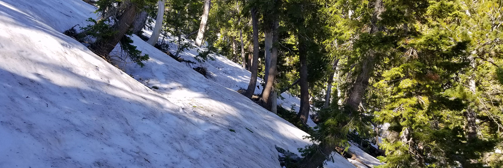 Snow Dead End on Mt Charleston South Climb Trail June 15th at 8,900ft!