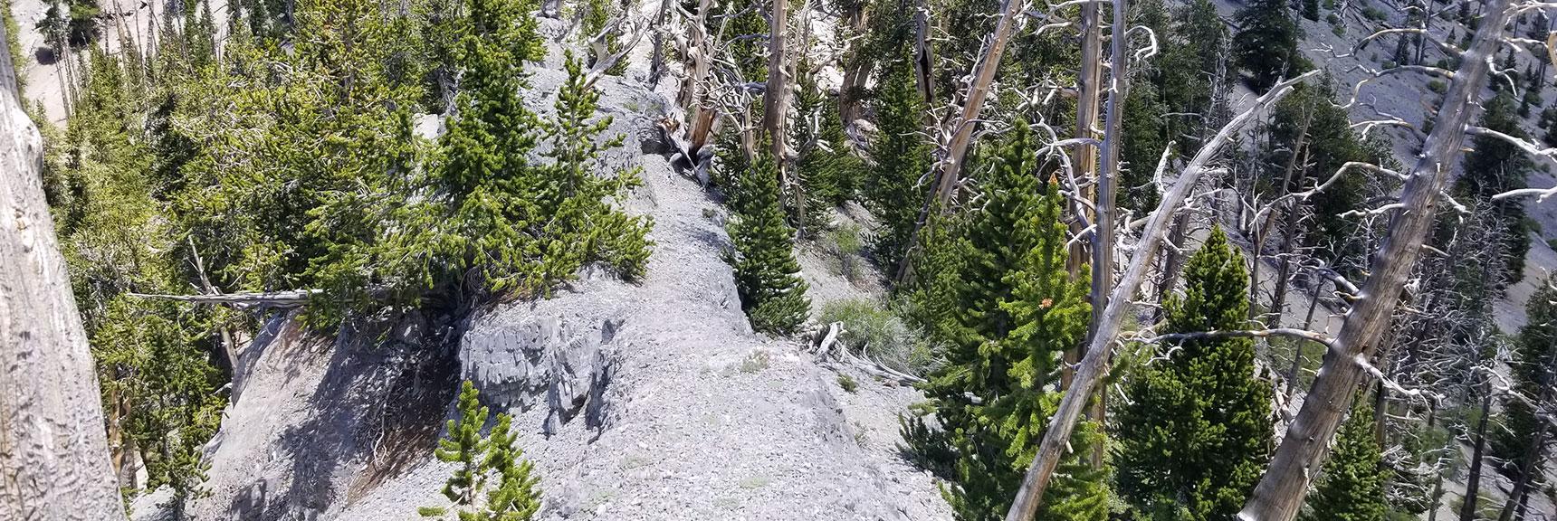 Narrow Cat Walk on Cutoff Ridge Between Upper North Loop Train and Mummy Mountain