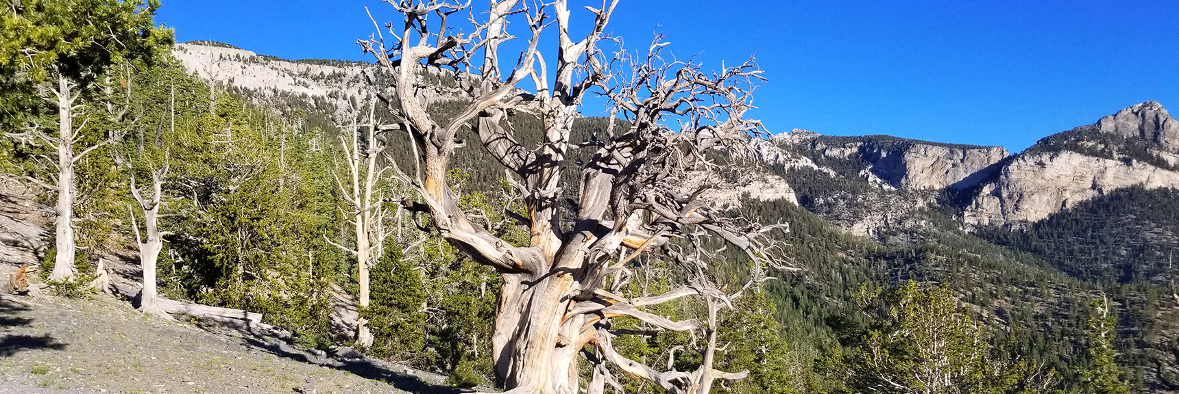 First Plateau on the North Loop Trail Toward Fletcher Peak