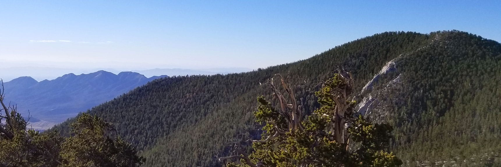 Fletcher Peak from Ridge Over North Loop Trail, La Madre Mt. in Background