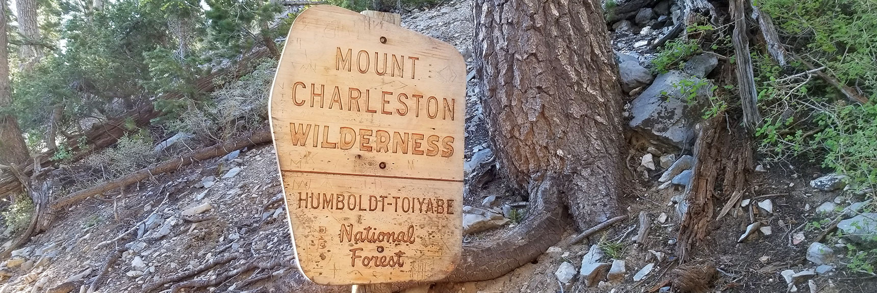 About Half Way to Griffith Peak on South Climb Trail in Mt Charleston Wilderness, Nevada