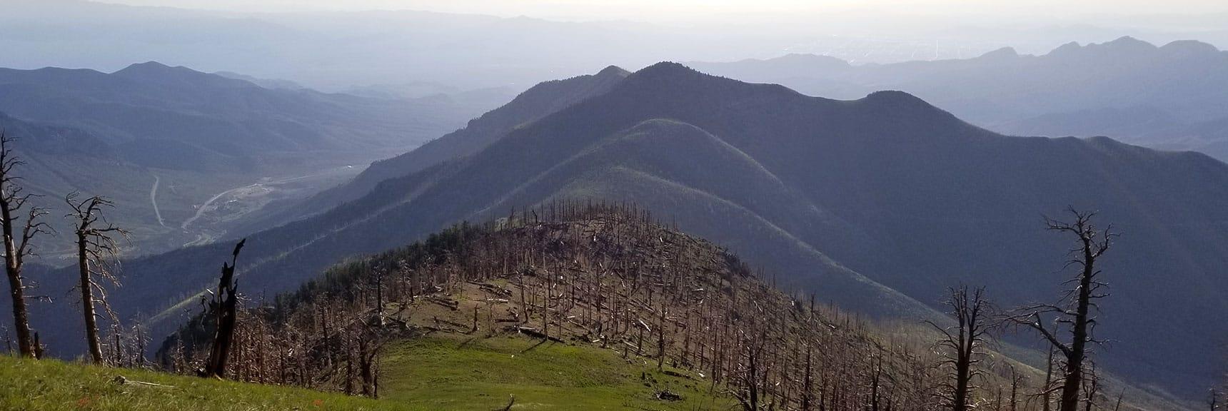 Heading Down Griffith Peak Toward Harris Peak