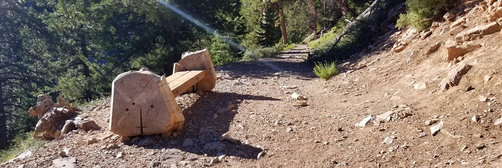 One of Many Resting Benches on the 1.3-Mile Cathedral Rock Trail, Mt. Charleston Wilderness, Nevada