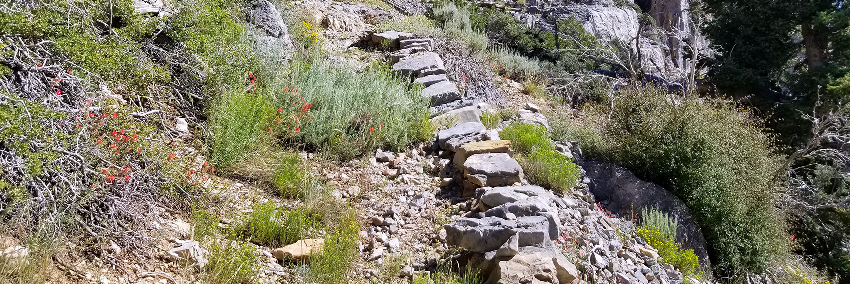 A Well Constructed But Poorly Maintained Trail Near the Harris Mountain Saddle, Nevada