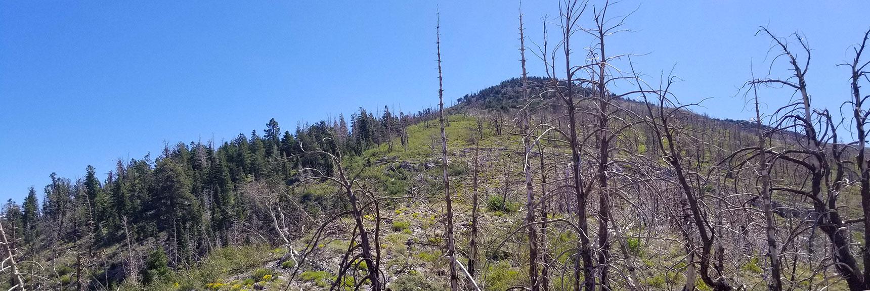 Look Up Toward Harris Mountain from the Saddle, Nevada
