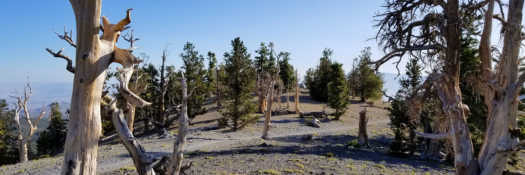 First Plateau on the North Loop Trail to Mummy Mountain in the Mt. Charleston Wilderness, Nevada