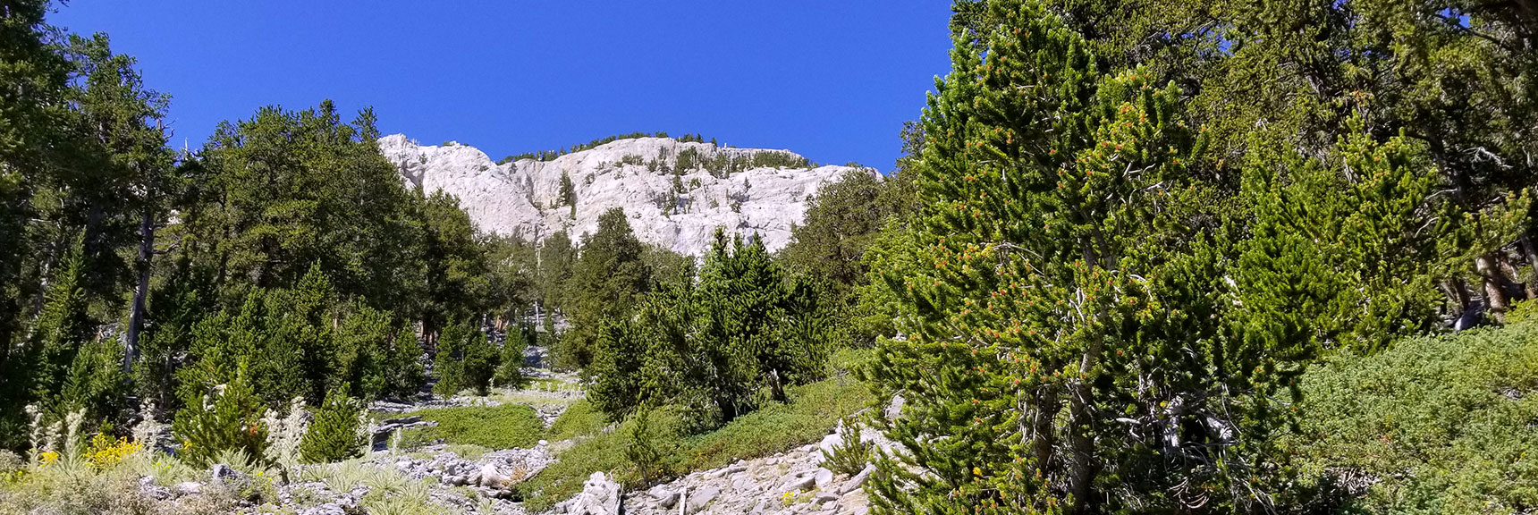 Looking Up the Delta Wash Canyon Toward Mummy Mt. East Summit Approach in Mt. Charleston Wilderness, Nevada