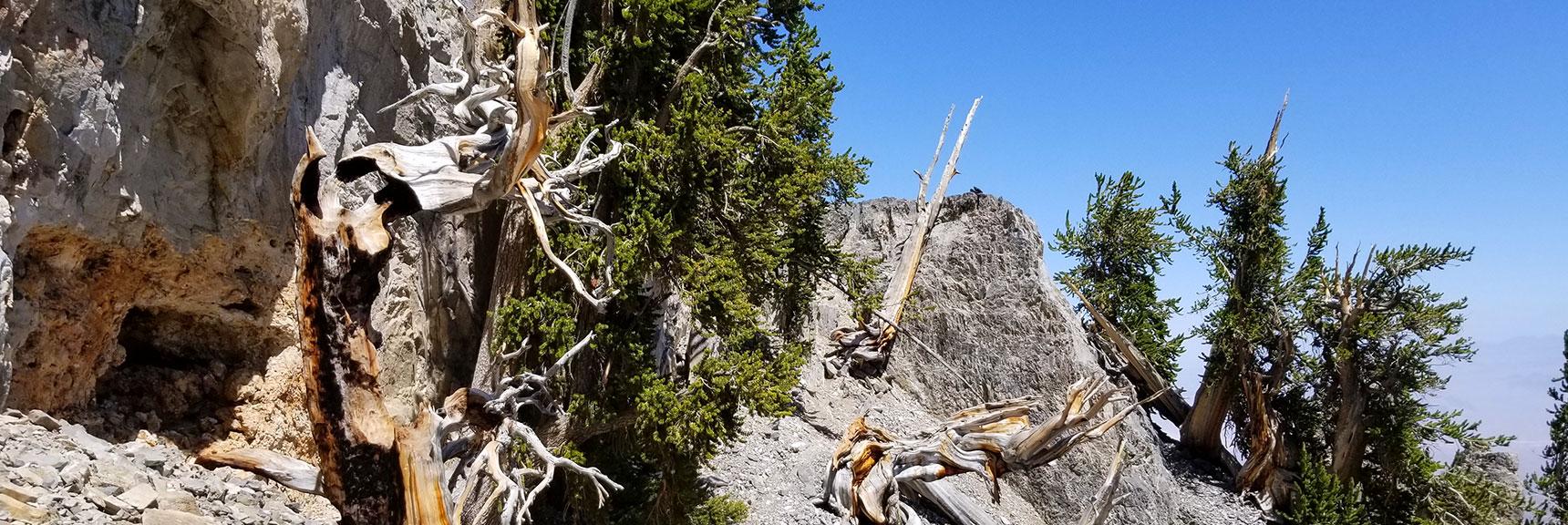 Closer Look Across to the Ledge Below Mummy Mt. East Summit in Mt Charleston Wilderness, Nevada