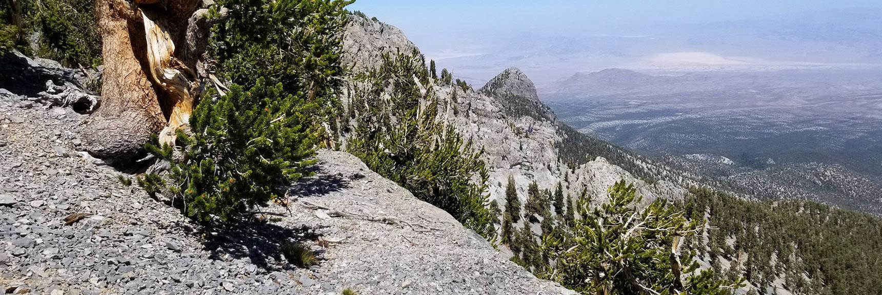 Mummy Mt. East Final Summit Approach Ledge in Mt. Charleston Wilderness, Nevada