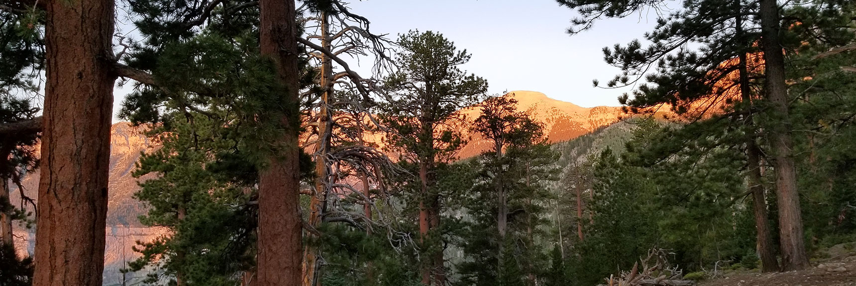 Charleston Peak Viewed from Trail Canyon at Sunrise, Nevada