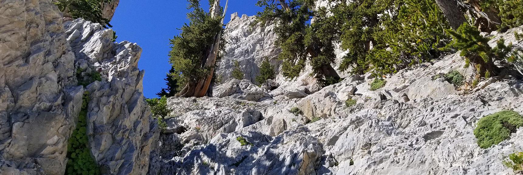 Heading Up Mummy's False Summit Approach Canyon, Nevada