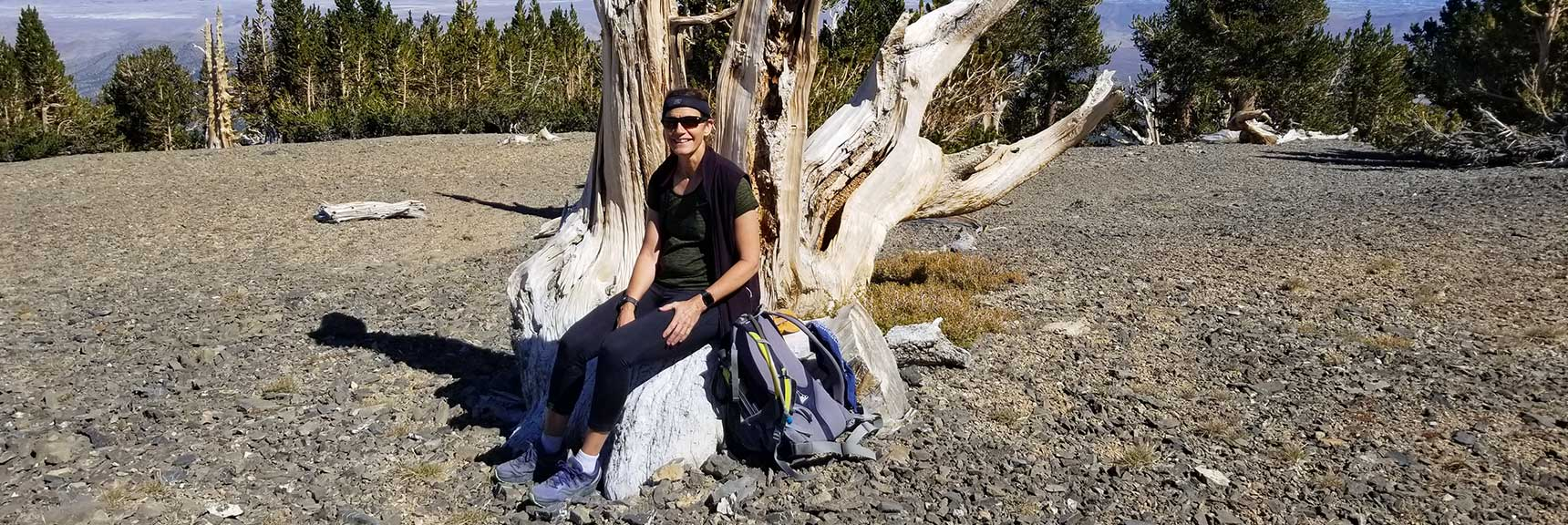 Perfect Chair Created by Ancient Bristlecone Pine Sculpture on Mummy Mt, Nevada