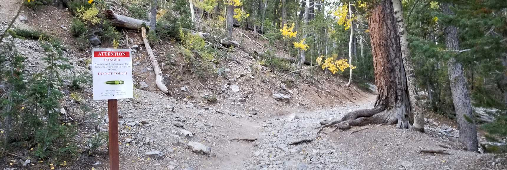 Avalanche Slope & Ski Area to Left, Bristlecone Pine Trail to Right in Lee Canyon, Mt. Charleston Wilderness, Nevada