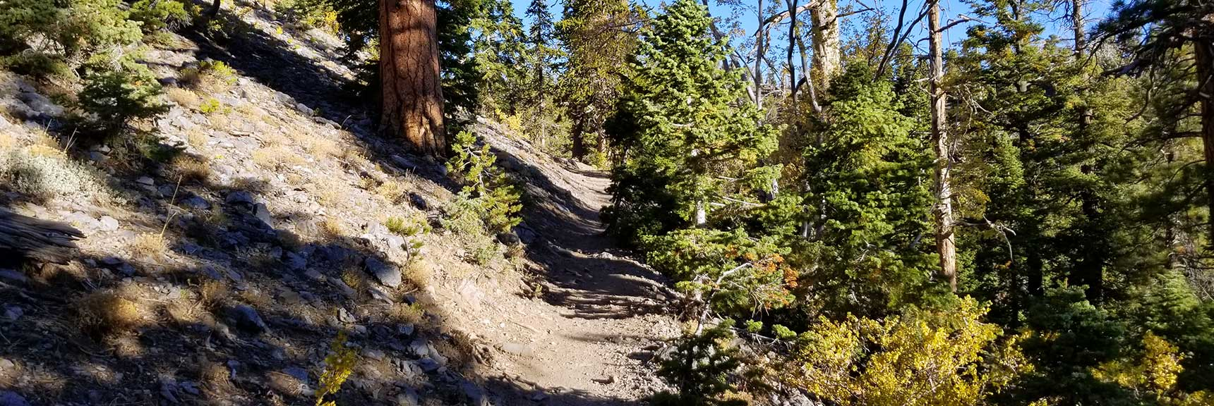 About 1/2 Mile Up the Bristlecone Pine Trail ight in Lee Cnyon, Mt. Charleston Wilderness, Nevada