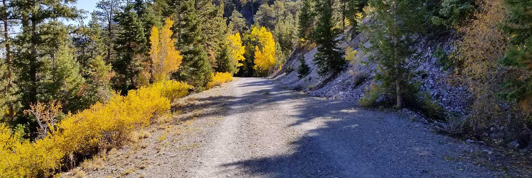 The Fire Road Descending the Last 3 Miles to the Lower Bristlecone Pine Trailhead in Mt. Charleston Wilderness, Nevada