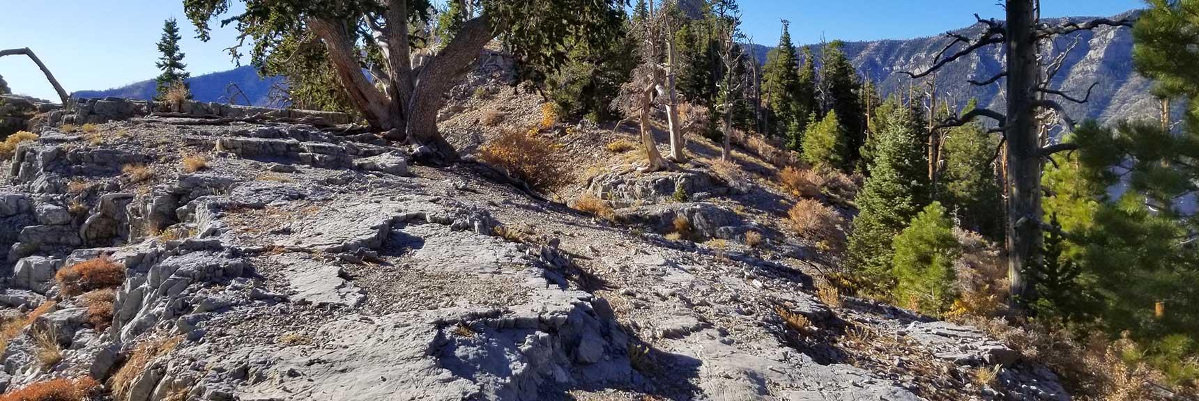 Starting Up Cockscomb Ridge trail, Cockscomb Ridge Wilderness Circuit in Mt. Charleston Wilderness, Nevada
