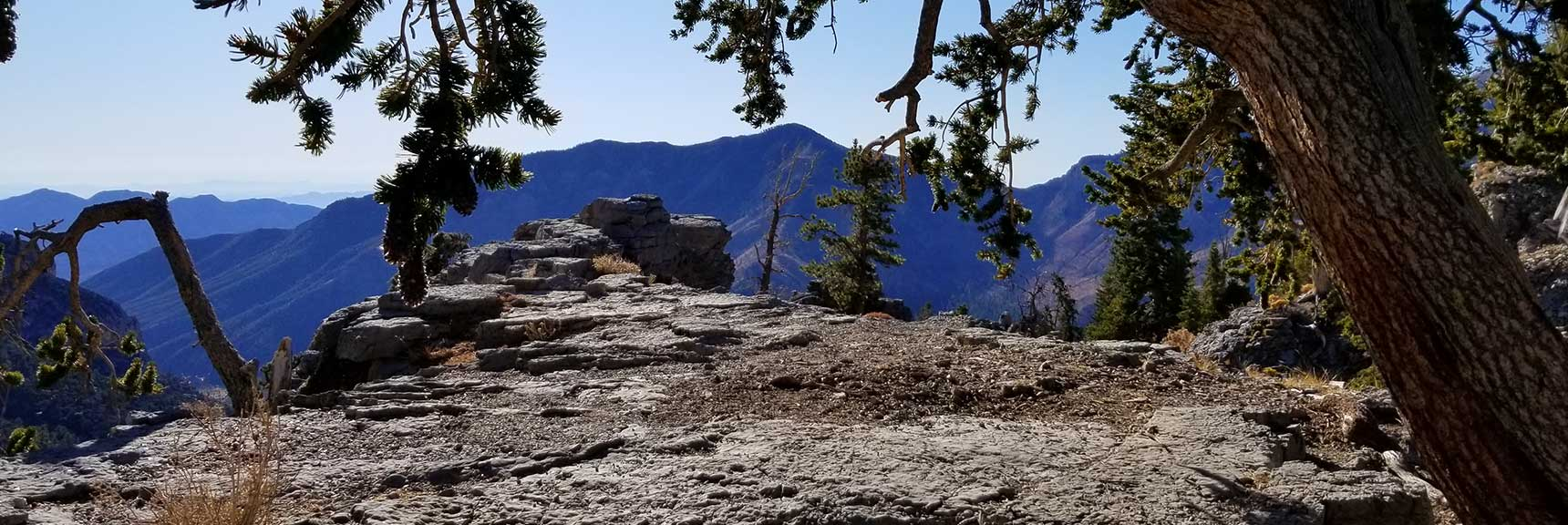 Cockscomb Ridge Wilderness Circuit in Mt. Charleston Wilderness, Nevada
