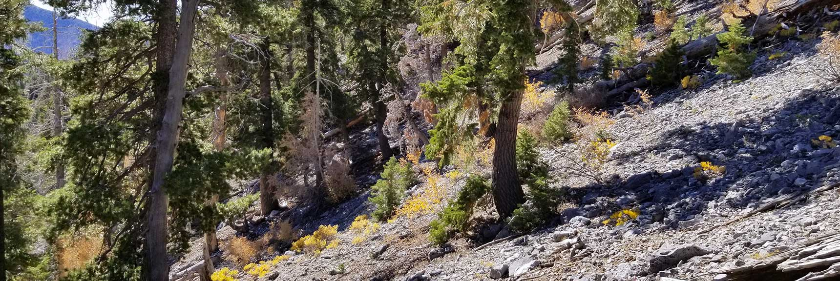 Traversing the Avalanche Slope on the East Side of Cockscomb Ridge in Mt. Charleston Wilderness, Nevada