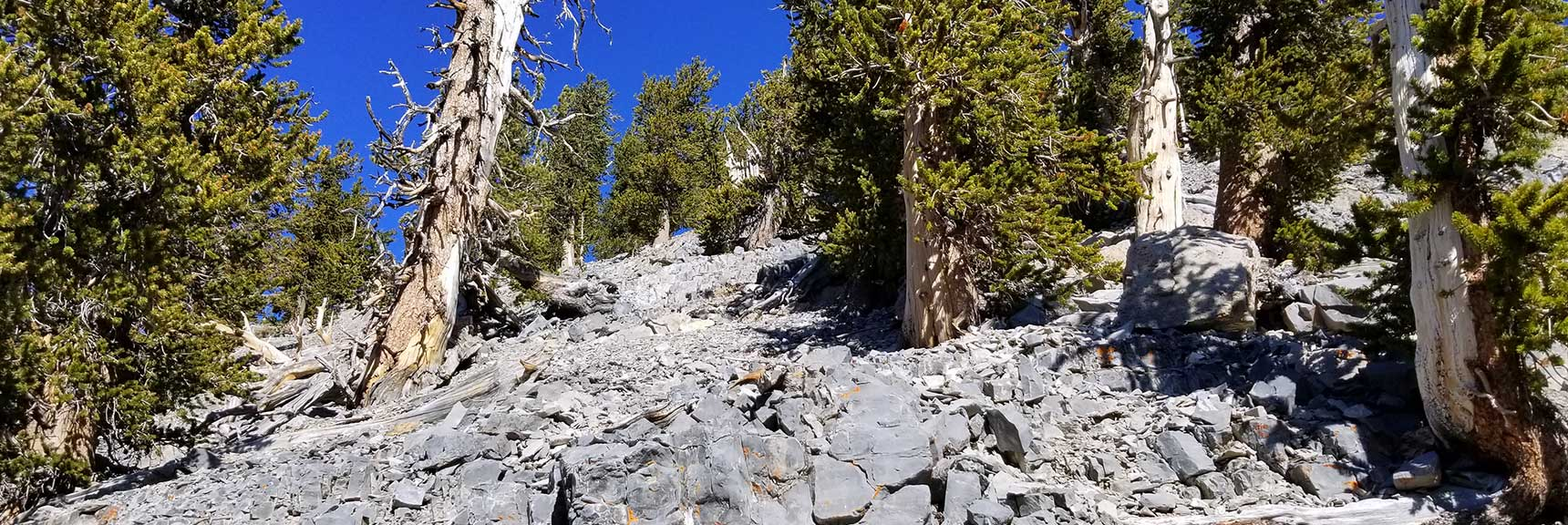 Looking up Lower Approach Route to Lee Peak in Kyle Canyon, Spring Mountains, Nevada Slide 001