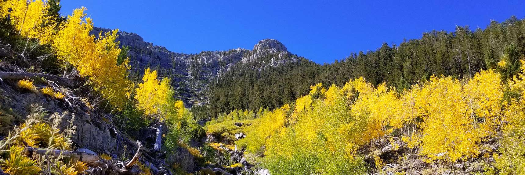 Wash Below Lee Peak in Lee Canyon, Nevada