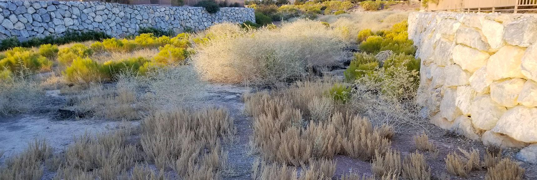Environmental Consciousness in Las Vegas, Nevada, Slide 006