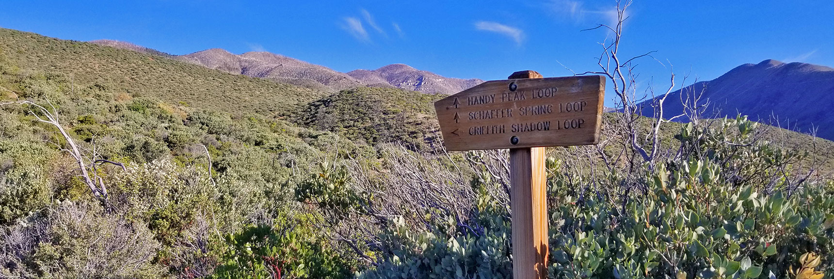Handy Peak Loop and Schaffer Spring Loop Trails Split Off   Griffith Peak from Lovell Canyon Trailhead, Nevada, 009