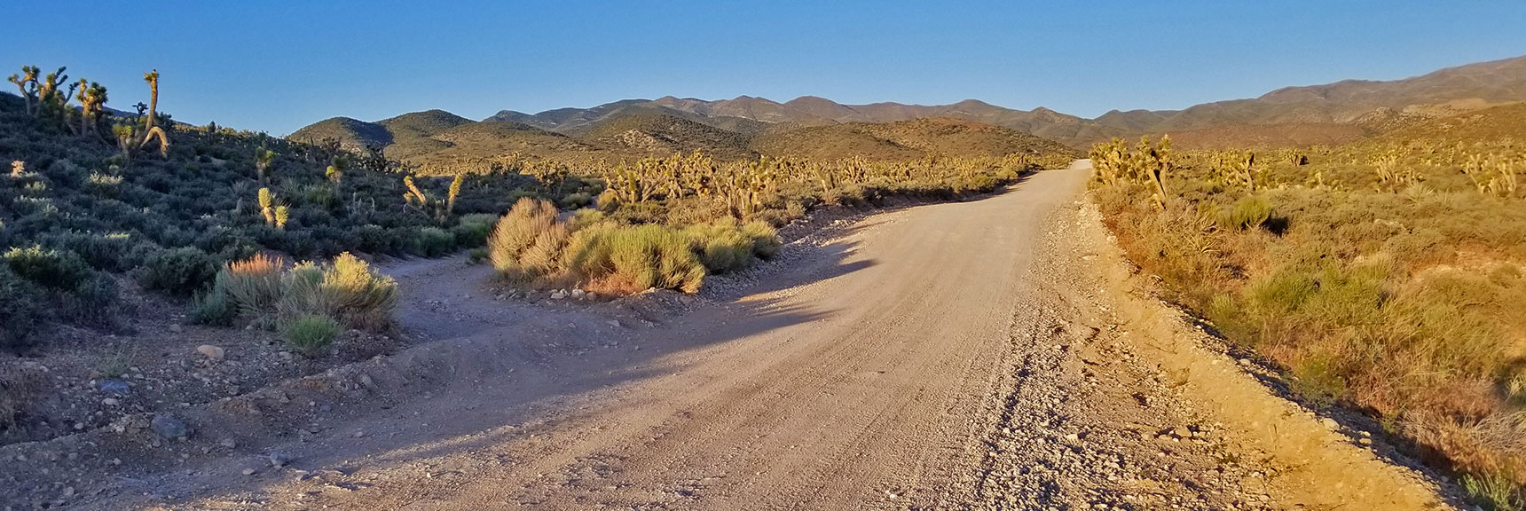 4WD Road Toward La Madre Mountain Splits Off from Harris Springs Road | La Madre Mountain Northern Approach, Nevada