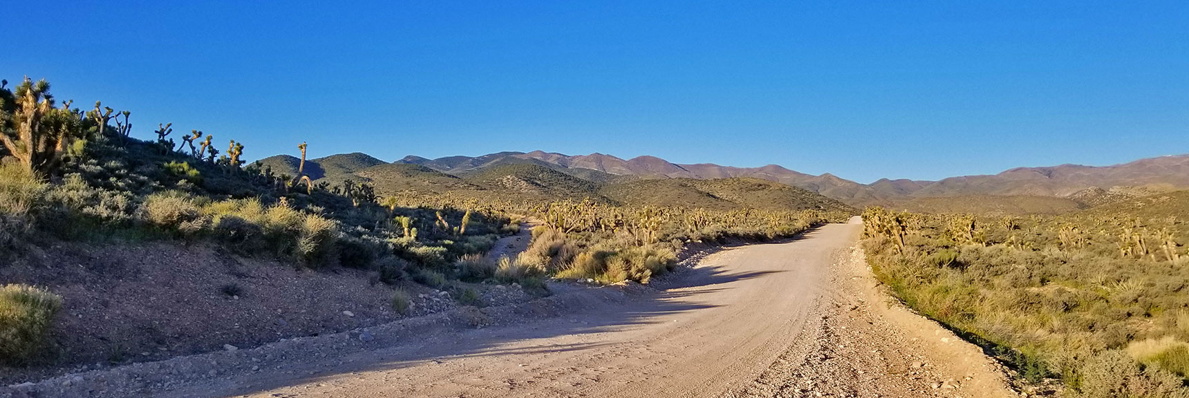 Harris Springs Road on the Way to El Padre Mountain, La Madre Mountains Wilderness, Nevada