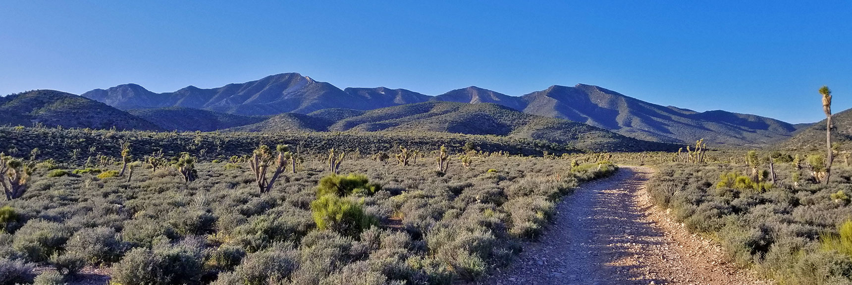 4wd Road Splits Off from Harris Springs Road On the Way to El Padre Mountain, La Madre Mountains Wilderness, Nevada