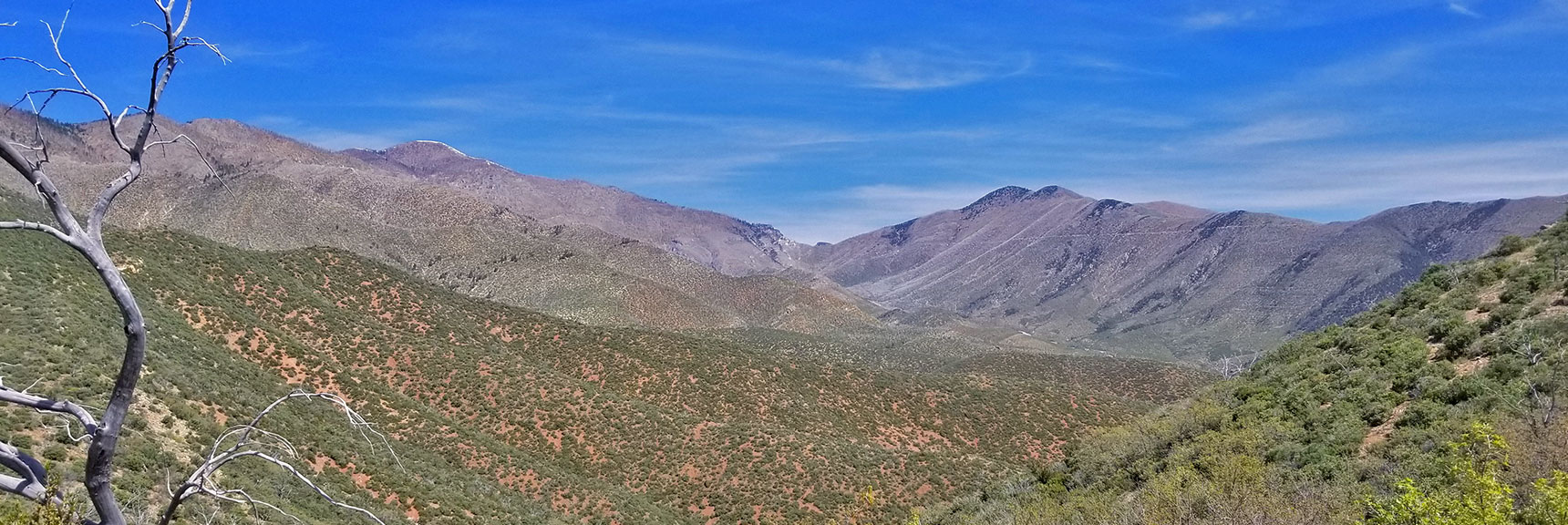 Griffith Peak, Harris Mountain and Saddle Viewed from Griffith Shadow Trail, La Madre Mountains Wilderness, Nevada