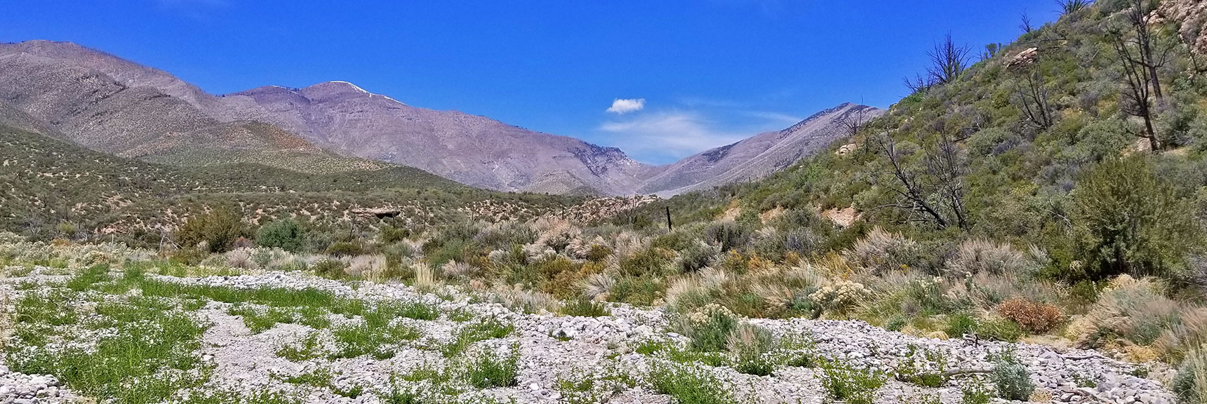 View Up Lowell Canyon, Lovell Canyon Trail, La Madre Mountains Wilderness, Nevada