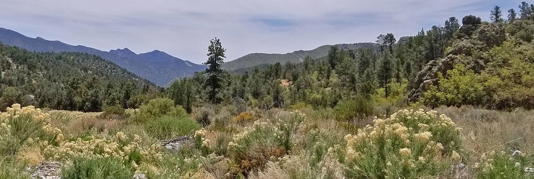 View Down Lovell Canyon, Lovell Canyon Trail, La Madre Mountains Wilderness, Nevada