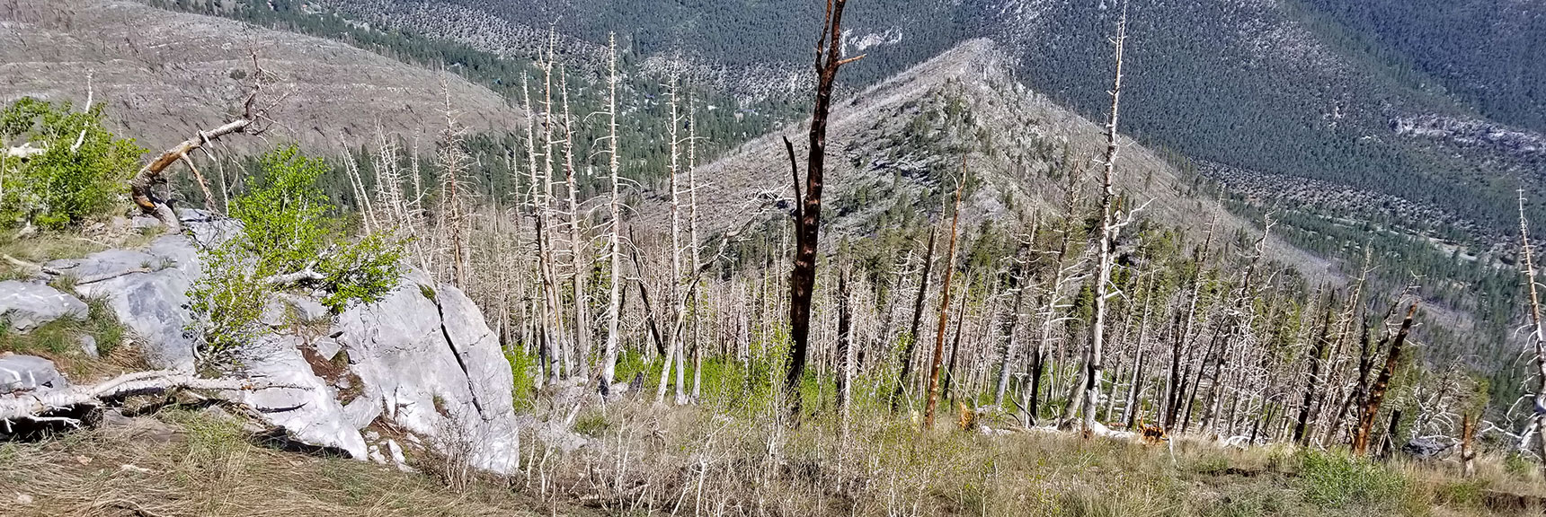 View Down Harris Mountain Approach Ridge | Harris Mountain Griffith Peak Circuit in Mt. Charleston Wilderness, Nevada