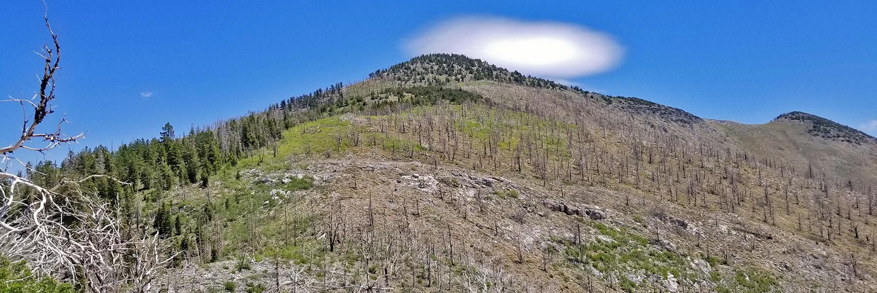 Harris Mountain North Ridge from Griffith Harris Saddle | Harris Mountain Griffith Peak Circuit in Mt. Charleston Wilderness, Nevada