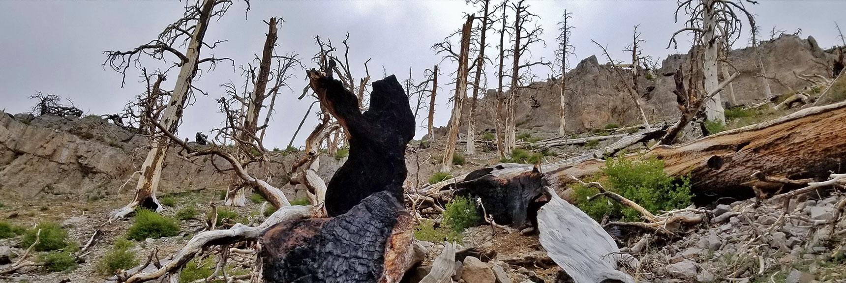 Skirting Below Cliffs on Upper Griffith North Ridge | Harris Mountain Griffith Peak Circuit in Mt. Charleston Wilderness, Nevada