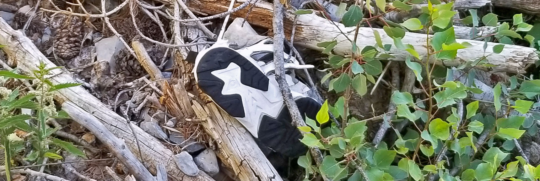 Lone Shoe Left Behind by a Hiker | Cathedral Rock to South Ridge Kyle Canyon Summit, Nevada