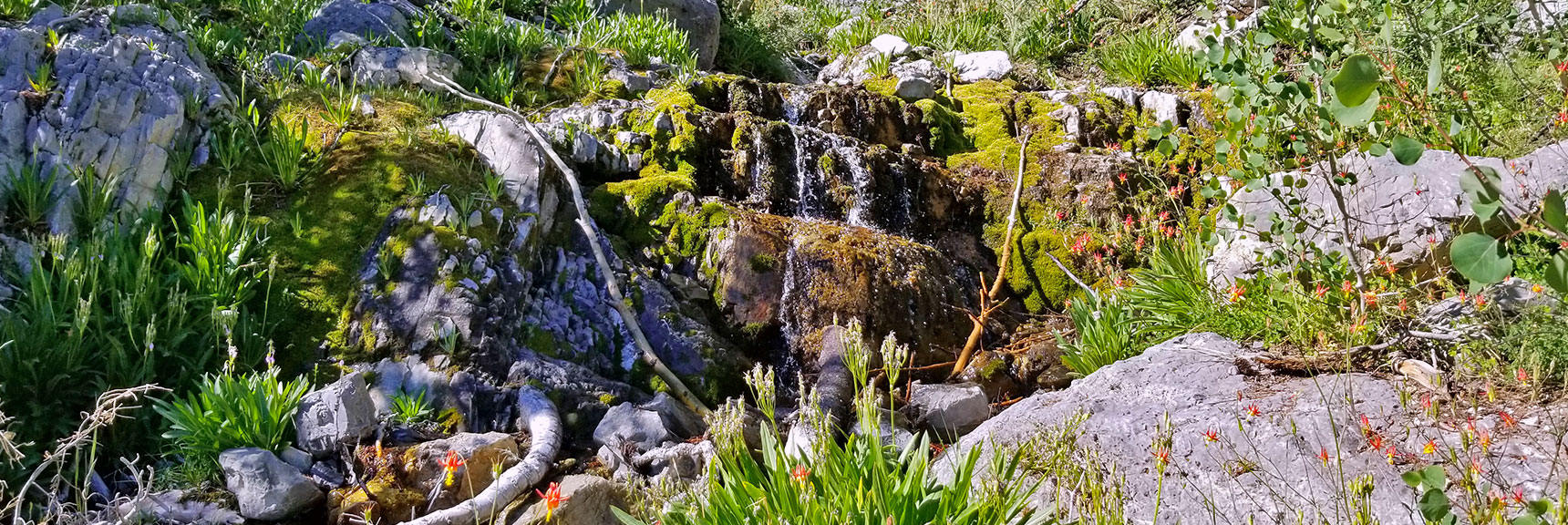 Canyon Spring Waterfall Cascading Over Moss Covered Ledge | Cathedral Rock to South Ridge Kyle Canyon Summit, Nevada