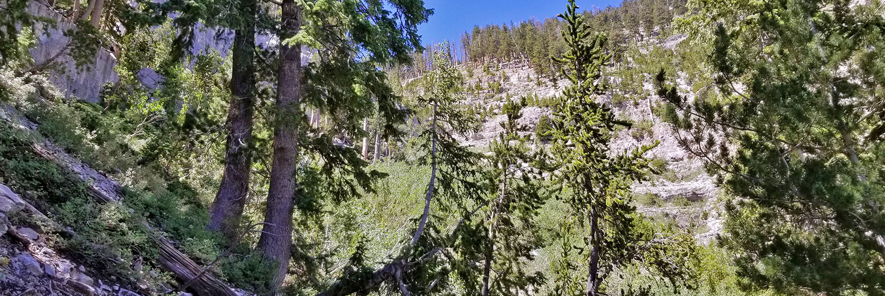 Avalanche Slope Along Base of Cliff Heading Up Canyon Wash | Cathedral Rock to South Ridge Kyle Canyon Summit, Nevada