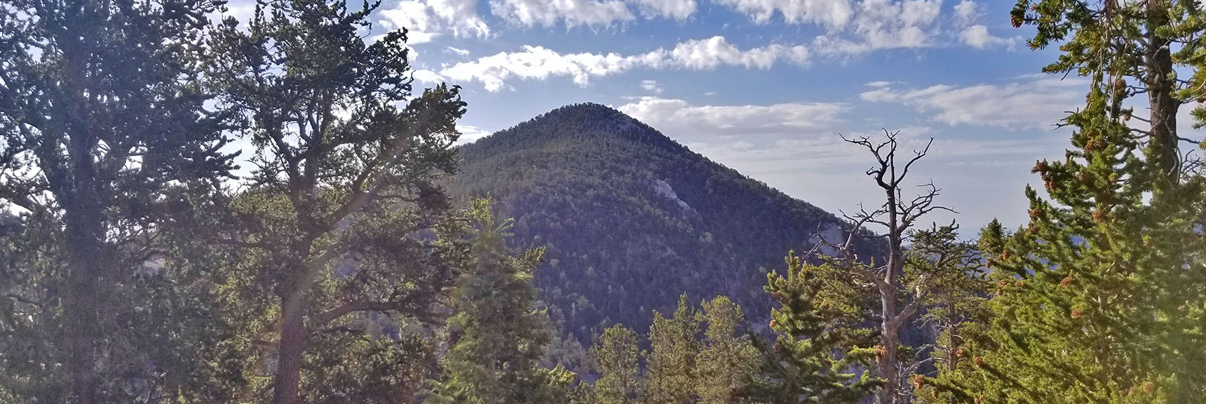 Fletcher Peak from North Loop Trail Approaching Raintree | Mummy Mountain's Knees | Mt. Charleston Wilderness, Nevada 008