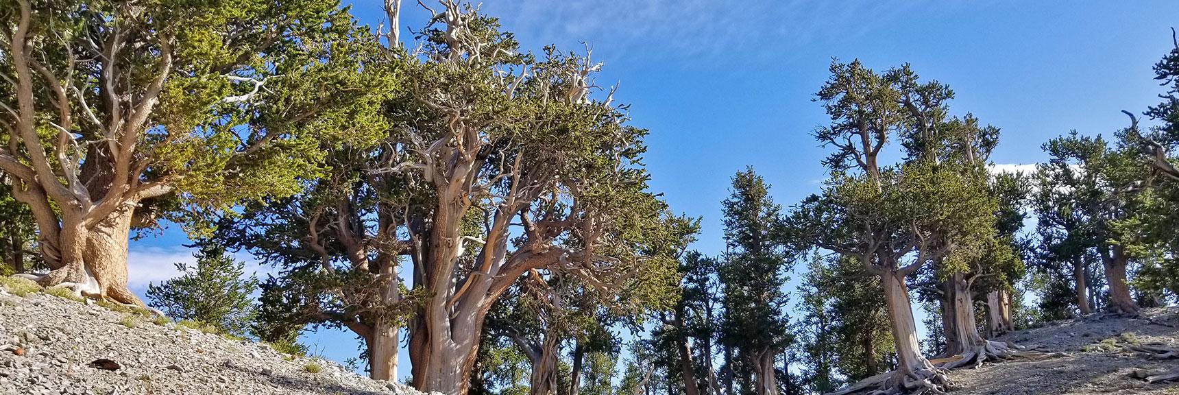 Arrival at Raintree on North Loop Trail | Mummy Mountain's Knees | Mt. Charleston Wilderness, Nevada 011
