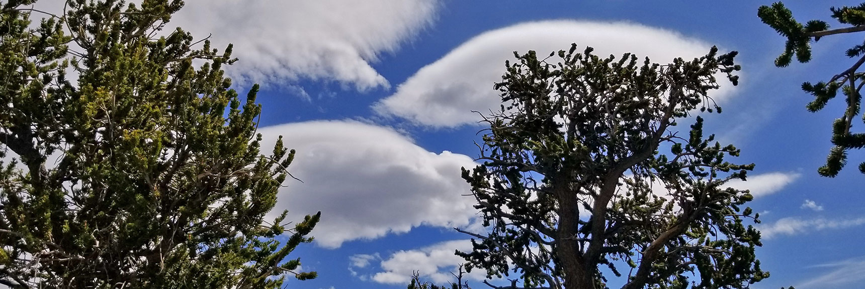 Clouds Floating Above the Bristlecone Pine Forest of Mummy's Knees | Mummy Mountain's Knees | Mt. Charleston Wilderness, Nevada 030