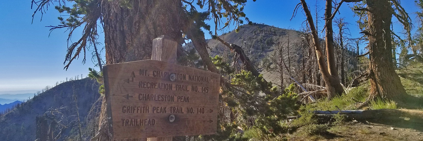 South Climb Trail Junction Directional Sign, Griffith Peak in Background | Griffith Peak & Charleston Peak Circuit Run, Spring Mountains, Nevada