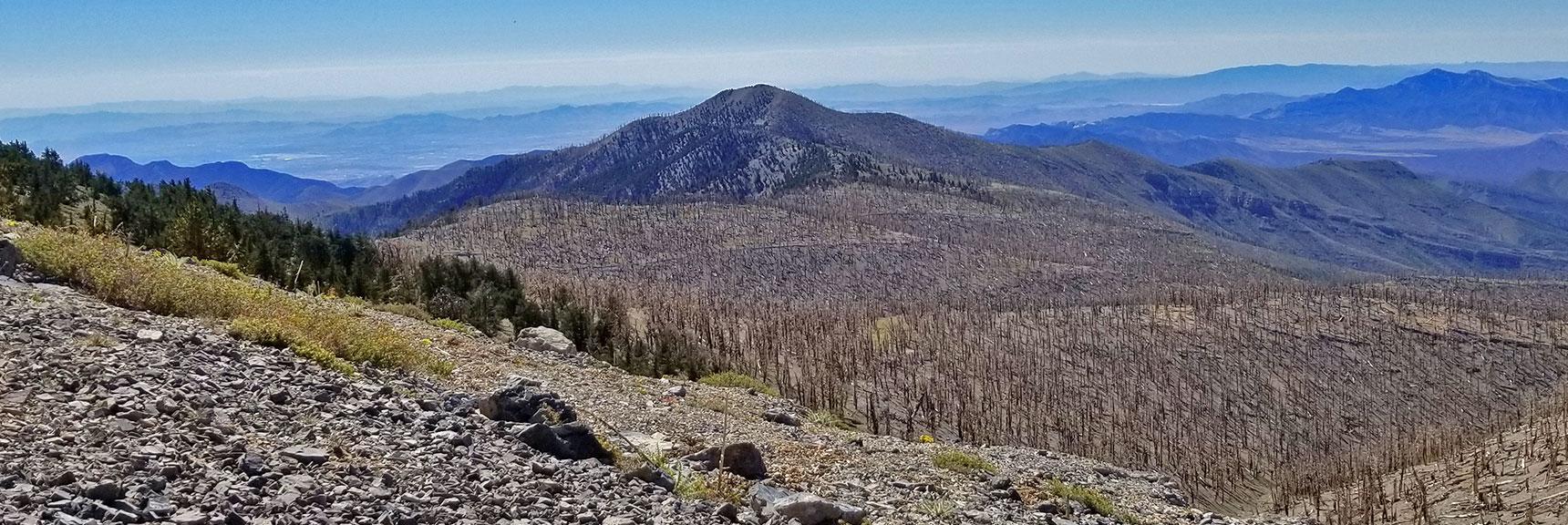 Griffith Peak and 2013 Burn Area from Upper Ridge Saddle | Griffith Peak & Charleston Peak Circuit Run, Spring Mountains, Nevada
