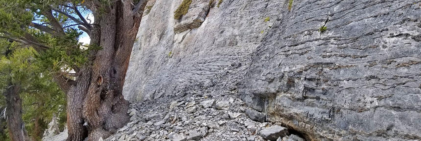 Base of Mummy Mountain Eastern Cliff   Mummy Mountain NNE, Mt. Charleston Wilderness, Nevada, Slide 014