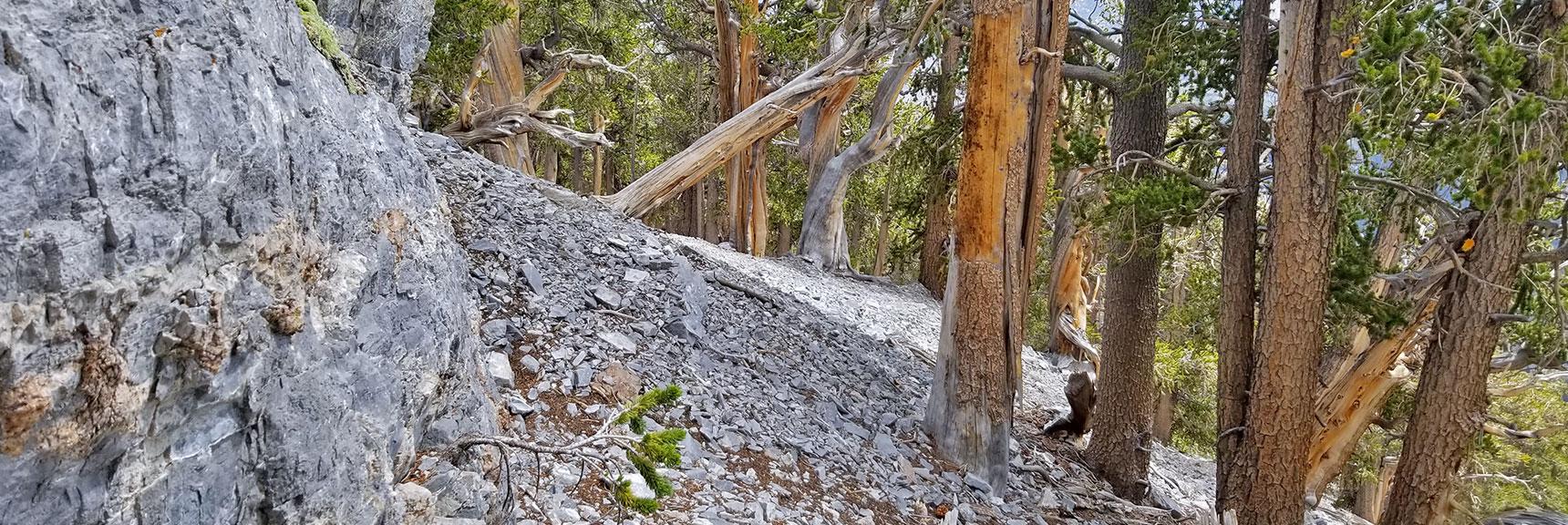 Base of Mummy Mountain Northeastern Cliff   Mummy Mountain NNE, Mt. Charleston Wilderness, Nevada, Slide 016